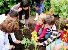 Pályázat fenntartható módon működő iskolakertek példáinak megosztására, elterjesztésére