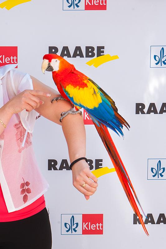 Raabe-Klett-papagáj-s